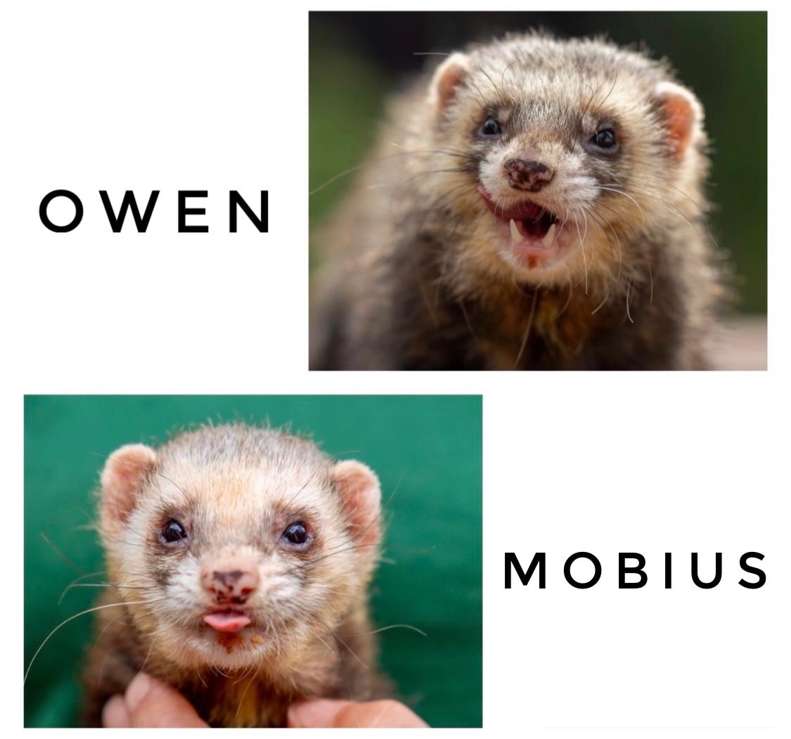Tierheim Aschaffenburg Mobius & Owen